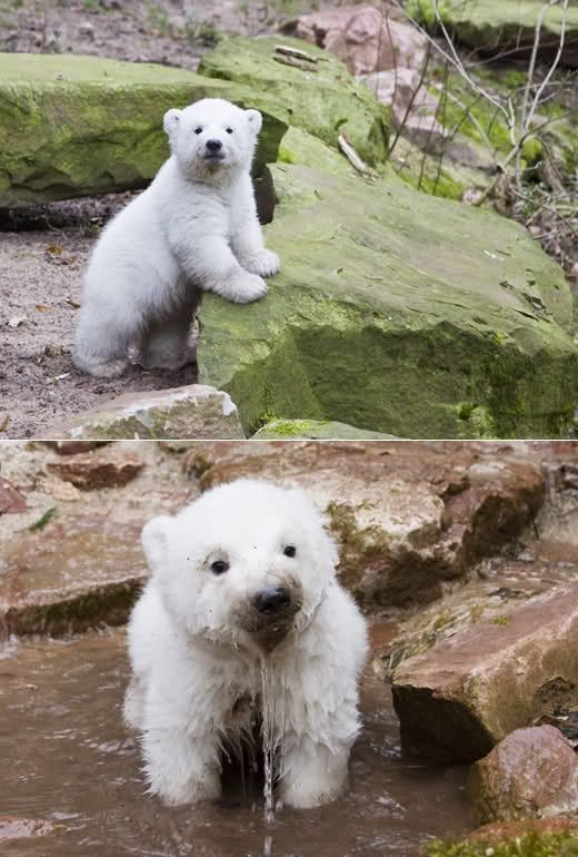 Polar Bear Cub! I have a dog that looks exactly like this bear