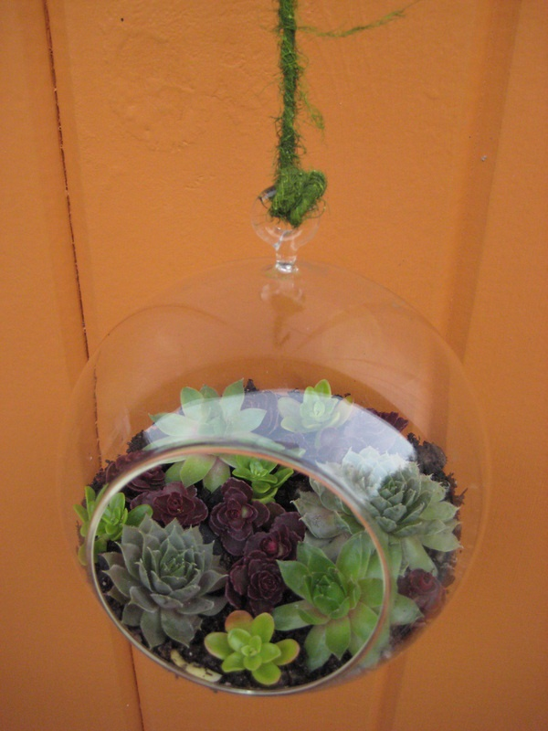Hanging Succulent Terrariums 30 00 Each Gotta Make