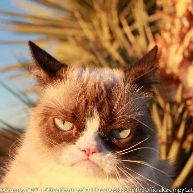 Good Morning  Grumpy C...