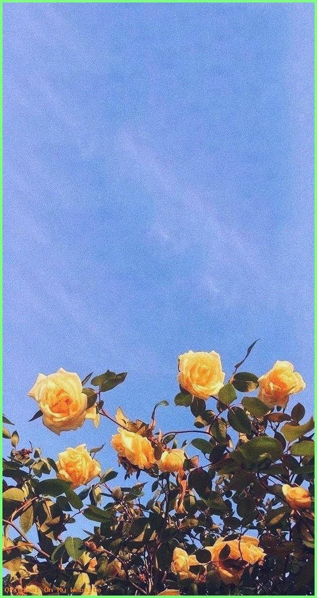 Iphone Wallpaper Aesthetic Yellow Roses Summer Yellow Roses Summer Wallpaperpintere In 2020 Flower Background Wallpaper Sunflower Wallpaper Aesthetic Iphone Wallpaper