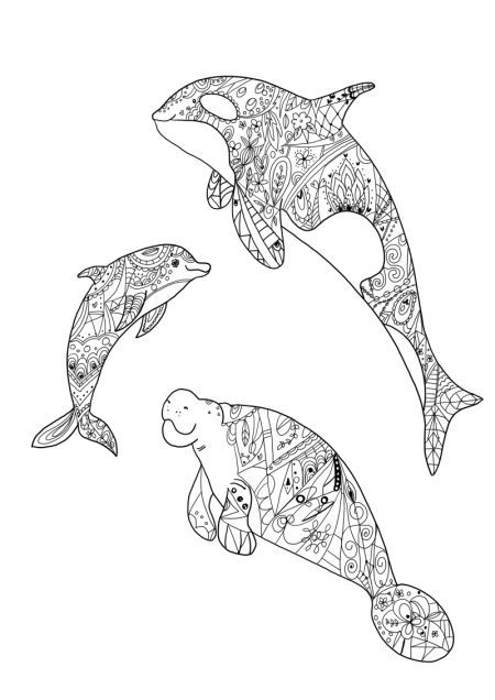 310 best coloring dolphin, whale, shark images on ...