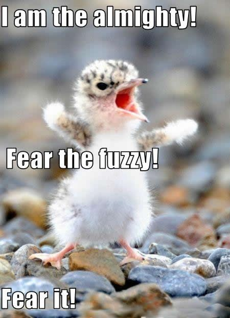 Funny animal picture; hilarious photo a cute little bird looking powerful and mighty