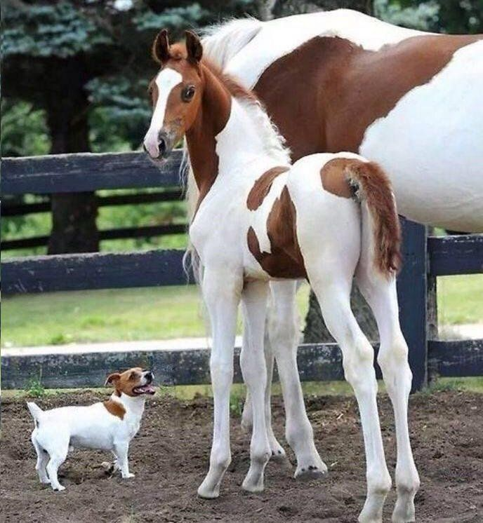"""Haha this dog looking up at the foal with a look on his face that says """"hey brother, I belong"""" :)"""