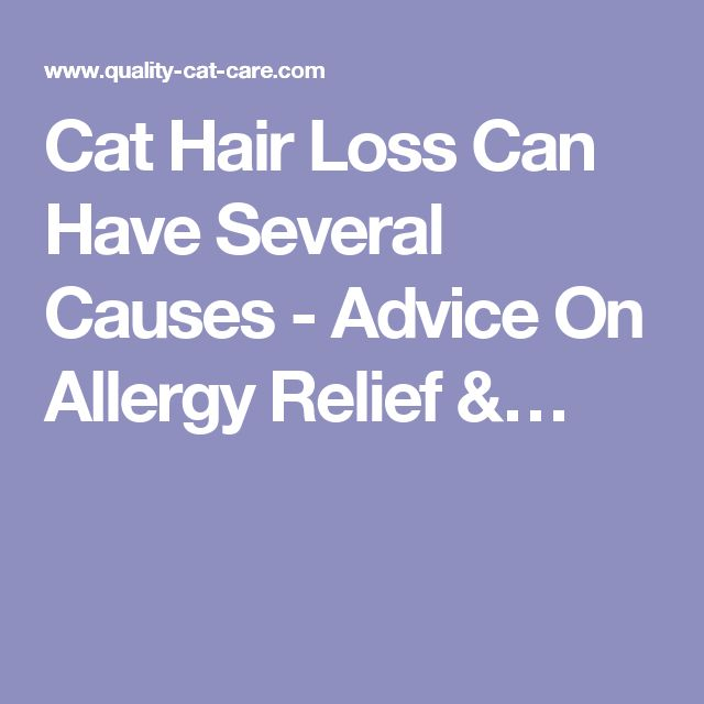 Cat Hair Loss Can Have Several Causes - Advice On Allergy Relief &…