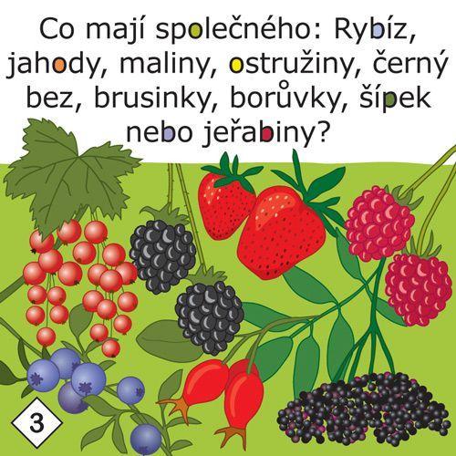 Co mají společného: Rybíz, jahody, maliny ostružiny, černý bez, brusinky, borůvky, šípek nebo jeřabiny?