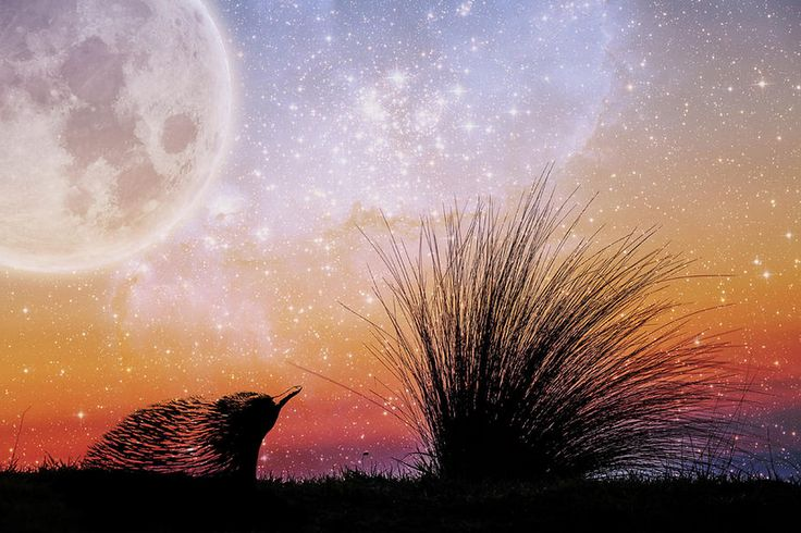 Fine art fantasy landscape - echidna and beach grass under starry sky