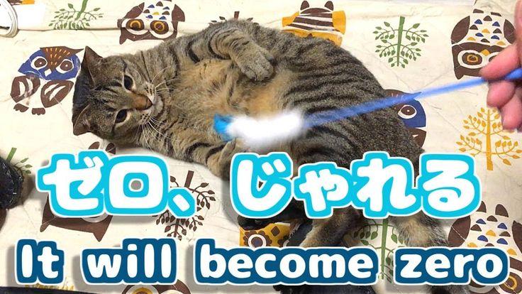 キジトラゼロ ねこじゃらしで子供のようにじゃれる猫 Stunning cat
