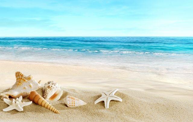 pláž, léto, mušle, krásně, oceán, písek, photoshop, dovolená, ráj, pláž, letní…