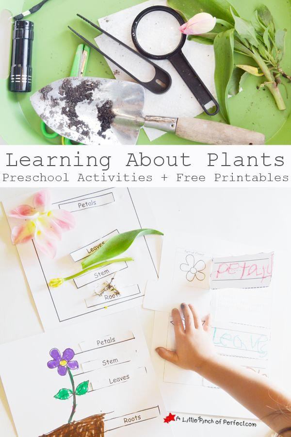 Learning About Plants: Activities and Free Printables for Kids-fun hands on learning! | A Little Pinch of Perfect