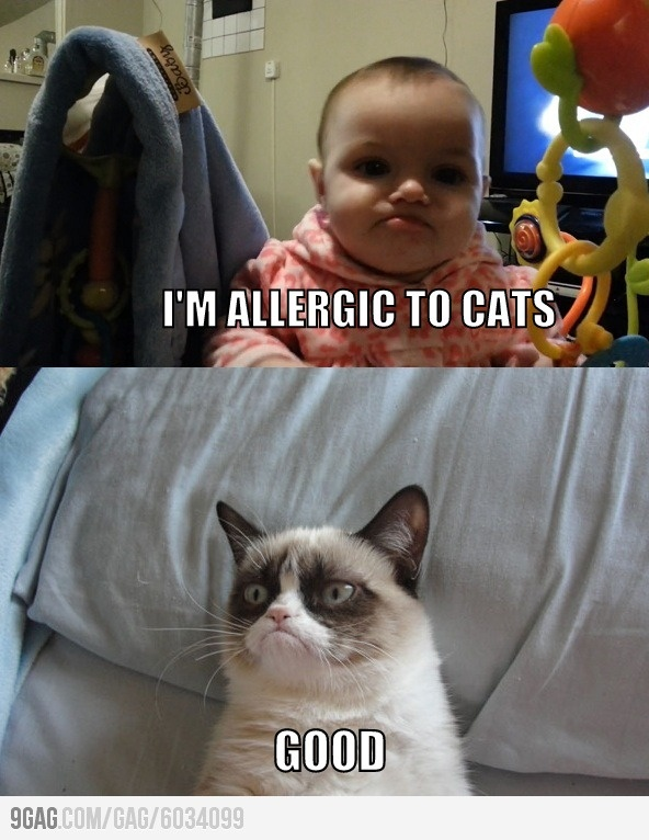 Grumpy Baby meets Grumpy Cat.  I have to admit I love grumpy cat, but he reminds me of pope Benedict .
