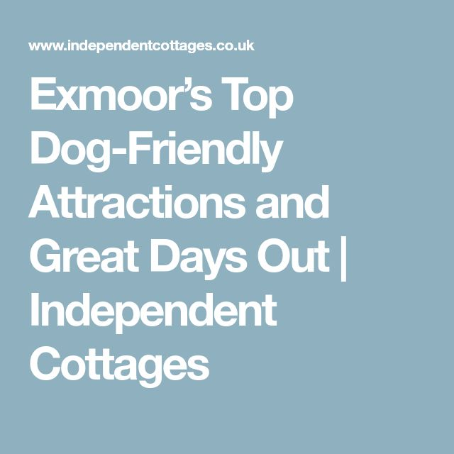 Exmoor's Top Dog-Friendly Attractions and Great Days Out   Independent Cottages