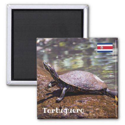Tortuguero - Yellow-bellied slider Turtle Magnet  $3.95  by DavidJallaud  - cyo customize personalize diy idea