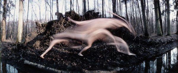 metamorphose-autoportrait-Frederic-Fontenoy-04.jpg (600×246)