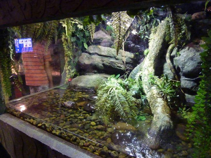 Crocodile skink cage setup - photo#20