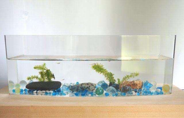 100均コレクションボックスを水槽に メダカミナミヌマエビ混泳 まるまる録 水槽 グリーン インテリア 100均