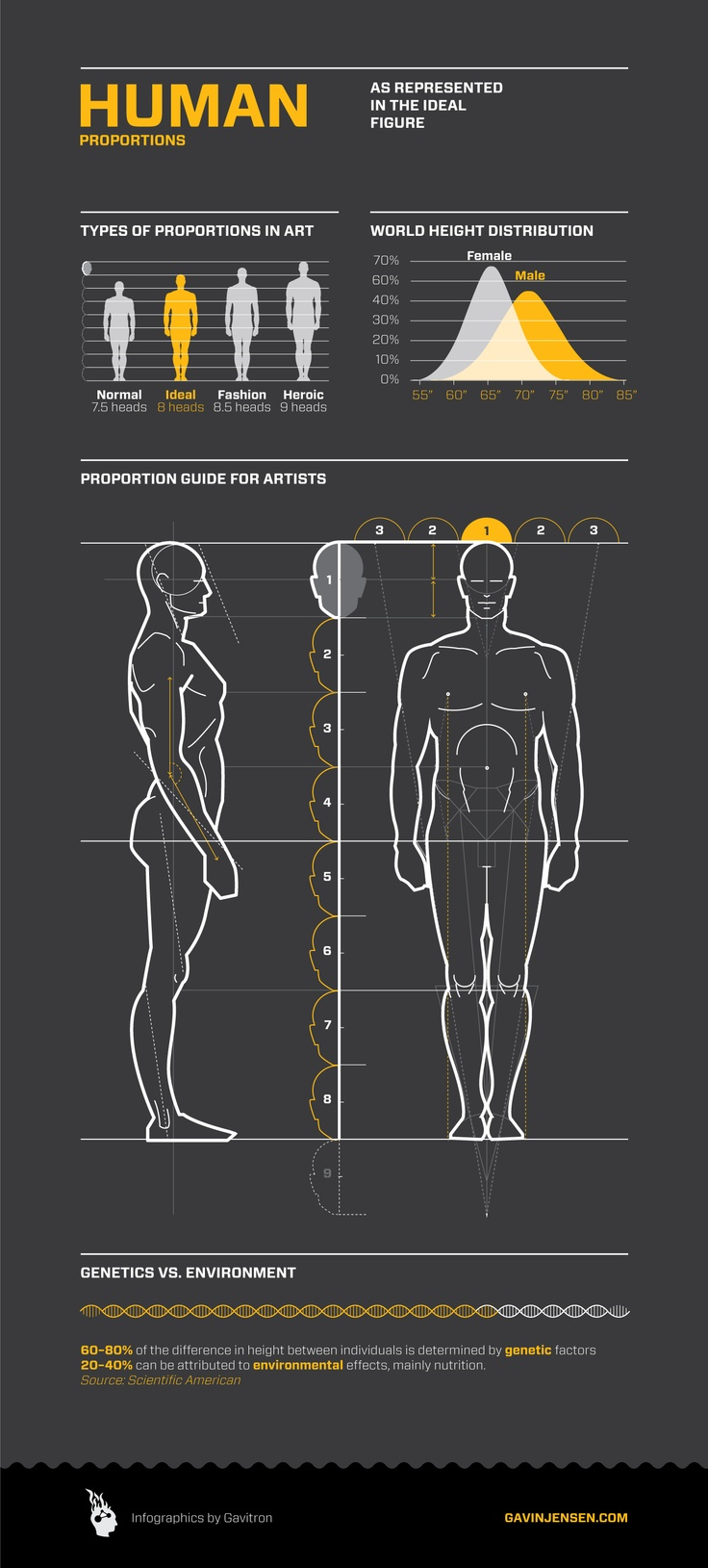 Proportion is the relation of one portion of an object to the whole. this picture shows the correct proportions of the human body.