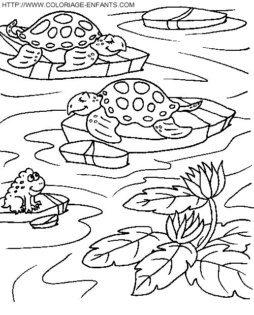 168 best images about thema schildpadden kleuters turtles theme preschool on pinterest how - Coloriage tortue ...