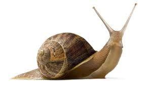 """Képtalálat a következőre: """"dancing snail"""""""