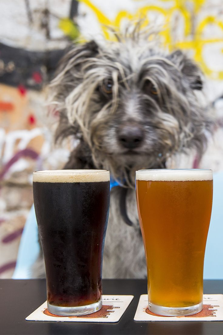 Even dogs are fond of the brews on tap at The Lord Gladstone