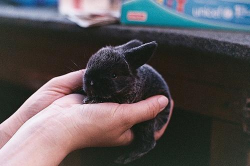 b.: Rabbit, Bunnies Obsession, Bunnies Foofoo, Aw Awwwwwwww, Pet, Baby Bunnies, Black Bunnies, Baby Animal, Buns Buns