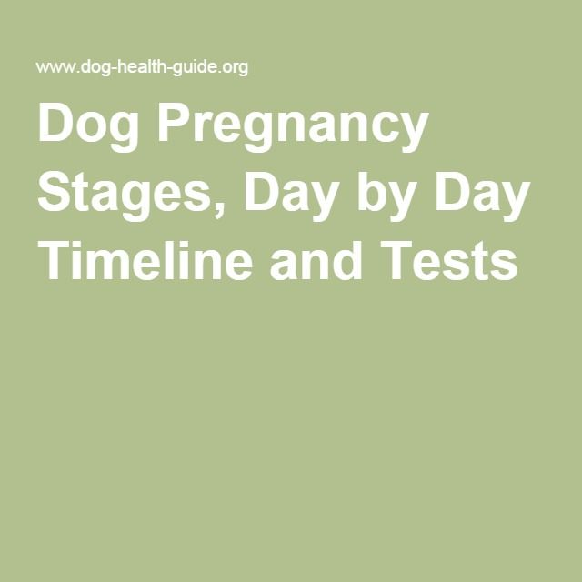 Dog Pregnancy Stages, Day by Day Timeline and Tests
