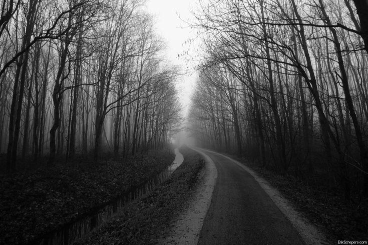 Woodlandroad www.erikschepers.com Foggy walk.  #Mist #Fog #foggy #mistig #weg #pad #road #woods #suteren #limburg #nederland #bomen #trees #nevel #morning #winter #early #spring #cold #path #walk #dutch #netherlands #holland
