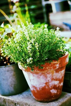 How to create an urban herb garden.  #herbs, #garden, #hipmomsgogreen: Herbs Garden, One Pot