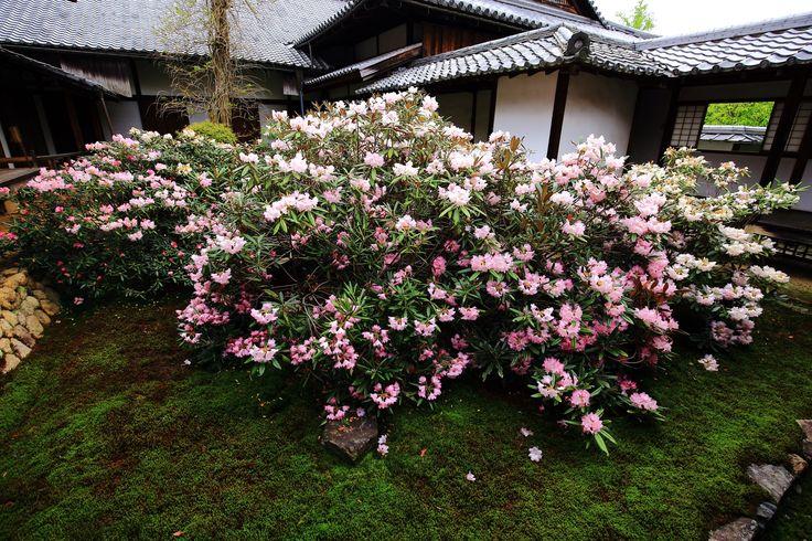 京都のお寺、神社、お庭、街並。京都の桜、紅葉、花、四季。京都の名所から穴場まで満載の写真と豊富なカテゴリーで紹介。京都旅行、京都観光にも。
