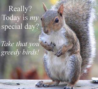 Squirrel Appreciation Day, Jan. 21, 2012....