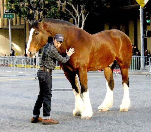 """Secret hoof boot for traction was used on the Clydesdale actor in the Super Bowl Budweiser """"Brotherhood"""" commercial - he was barefoot and slipped when cantering down the city streets in early takes."""