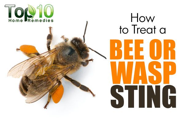 how to tell a wasp from a honey bee