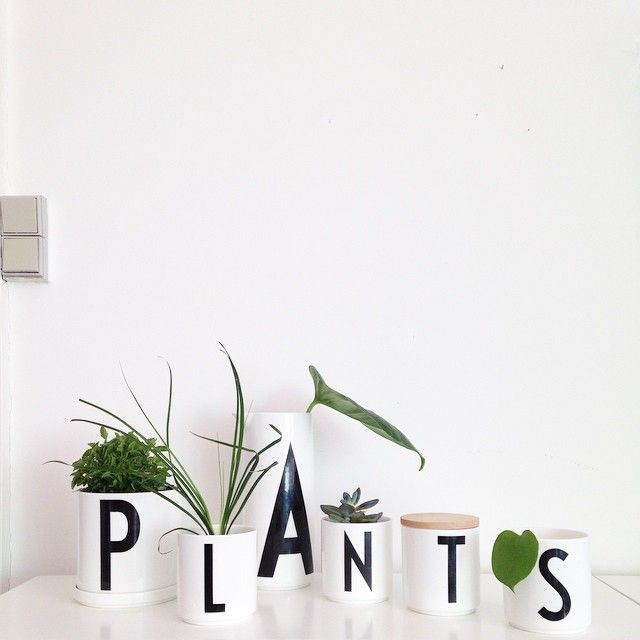 Our cups, jars and plant pot are perfect for small plants in your home. Typography: Arne Jacobsen