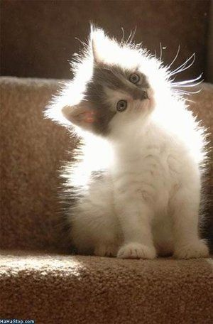 :)Lights, Auras, Pets, Fuzzy Wuzzy, Kittens, Angels, Kitty, Animal, Cat Photos