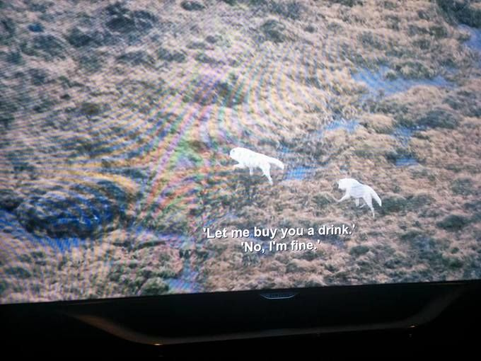 BBC Nature Show Accidentally Shown With Aziz Ansari Stand-Up Subtitles – Pleated-Jeans.com