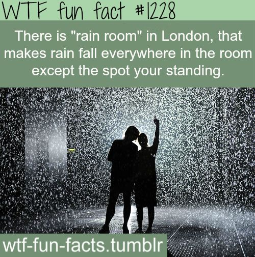 Rain Room In London MORE OF WTF FACTS are coming HERE awesome and fun facts ONLY     I want to go here