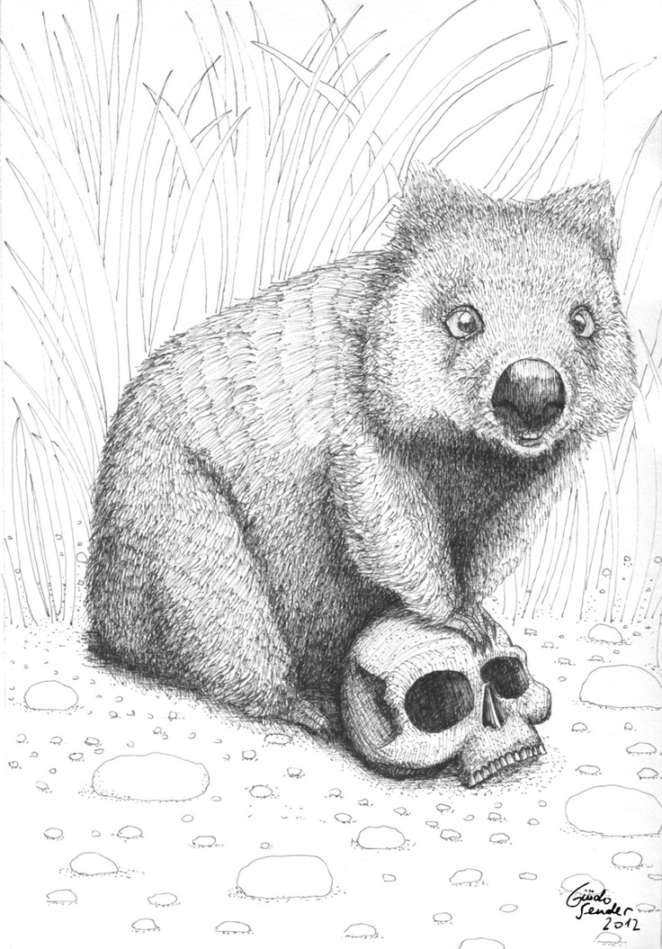 Line Drawings Of Australian Animals : Best wombat images on pinterest stew