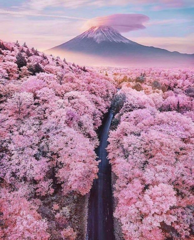 Cherry blossom season is nearly over in Japan. That doesn't mean you can't enjoy beautiful pictures showing Japan's most iconic views and dream of next year.Fuji, Shizuoka, Japan  📸Photo by  😊Thank you for amazing photo! Monte Fuji, Amazing Destinations, Travel Destinations, Wonderful Places, Beautiful Places, Beautiful Pictures, Beautiful Flowers, Nature Photography, Travel Photography