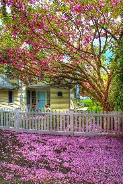 What beautiful colors.: Dreams Home, Blue Doors, Gardens, Curb Appeal, Back Porches,  Pale, Accent Colors, Yellow House, White Picket Fence