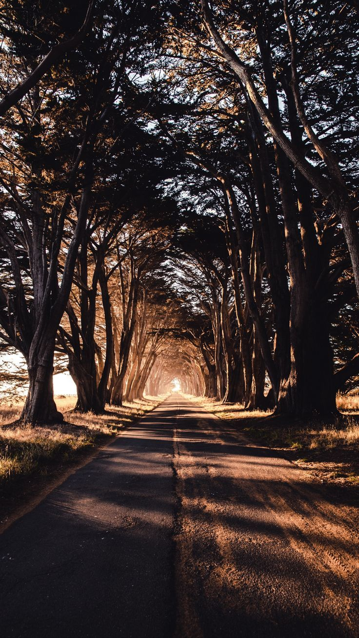 Nature Road Trees Shadow Wallpapers Hd 4k Background For