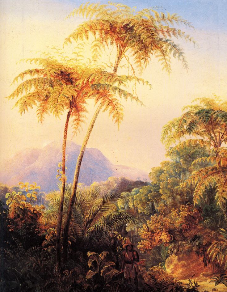 Arboreos in the Brazilian tropical forest  by Johan Moritz Rugendas (1802-1855)