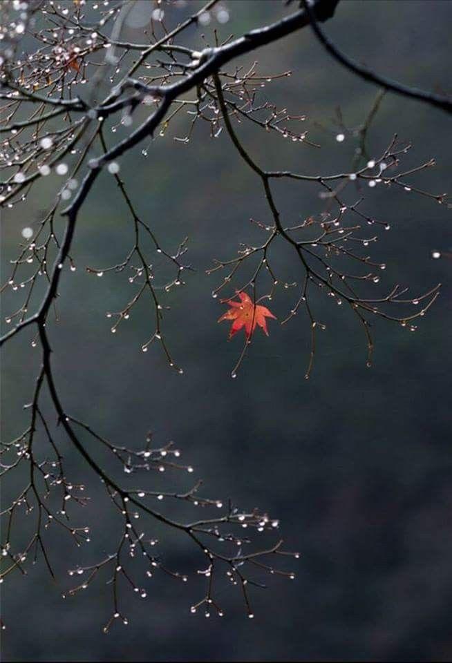 Ahornblatt. #Natur #Fotografie