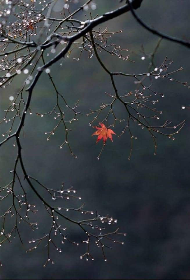 Maple leaf. #nature #photography – Schöne Fotos