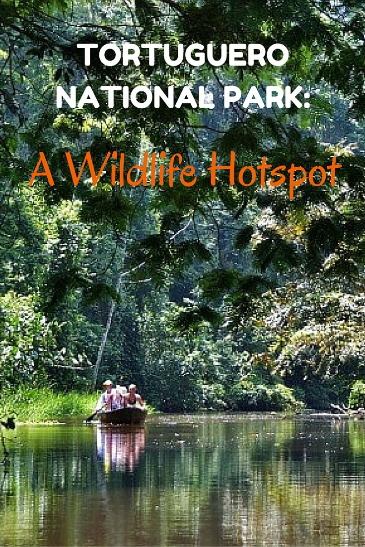 A canal tour through Tortuguero National Park is one of the best ways to get up close to wildlife in Costa Rica. More info on planning your visit here: http://www.twoweeksincostarica.com/tortuguero-national-park/