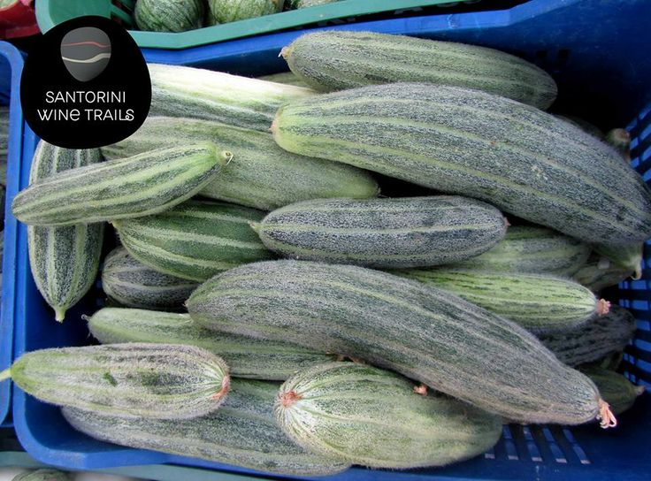 Katsouni is the cucumber of Santorini. It's bigger than the common cucumber and has a thicker skin and more seeds. If not harvested on time, it becomes sweet and has a melon taste!