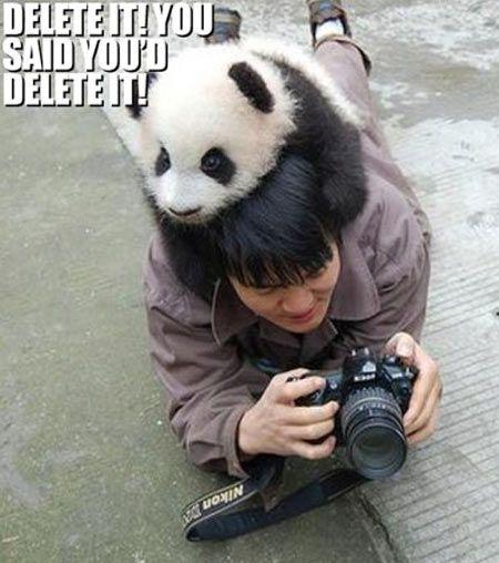 :) funny panda | HUMOR FUNNY PICS LOL CATS FOLLOW ME ...