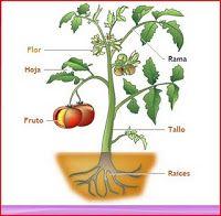 ¡sumérgete en nuestro mundo y te sorprenderás! : Reino vegetal