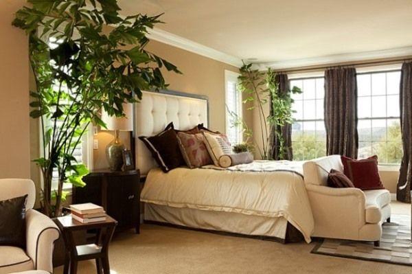 какие комнатные растения должны быть в спальне