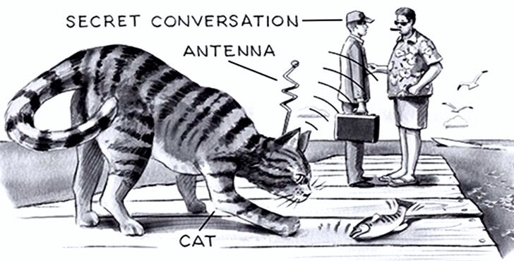 """The 1st mission for Acoustic Kitty was to eavesdrop on a conversation. The mission took place near the Soviet embassy. The CIA agents sat in van across the street where they released Acoustic Kitty. The kitty took a few steps out of the van towards the street and was ran over by a taxi. This was the only mission of Project Acoustic Kitty. The CIA concluded that """"it would not be practical."""""""
