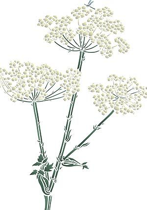 Wild Flower Stencils Giant Hogweed Cow Parsley Flower Stencil
