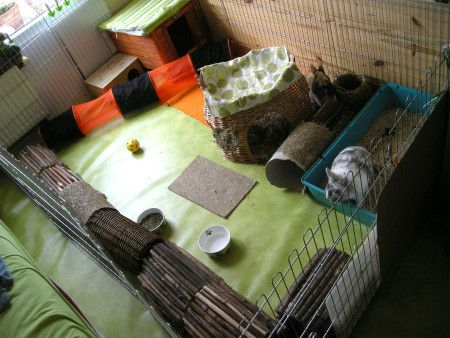 enclos Quinoa Esope